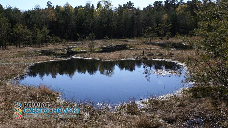 Fragment użytku ekologicznego Jeziorko w pobliżu Korzonka - Przykuta / Wikipedia / CC BY-SA 3.0