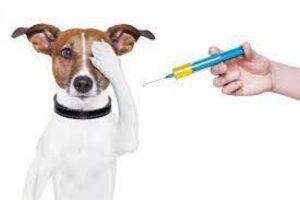 26 czerwca 2021 roku ( sobota) na terenie gminy Starcza szczepienie psów przeciwko wściekliźnie