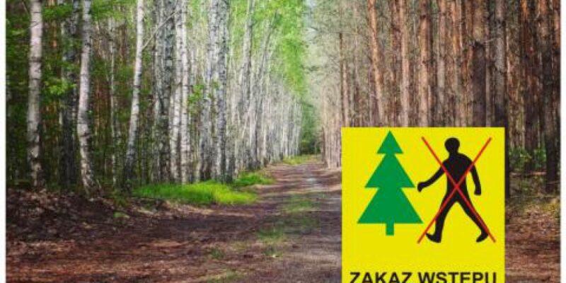 Zakaz wstępu do lasu na terenie Leśnictwa Mełchów