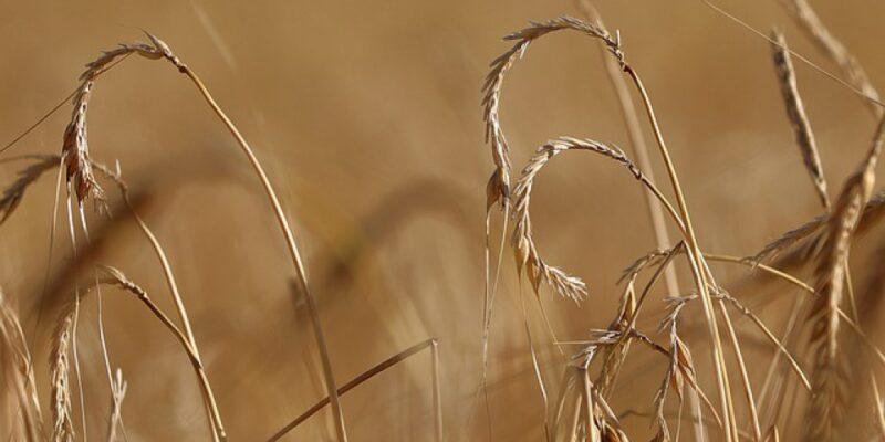 Informacja w sprawie szacowania strat w produkcji rolnej