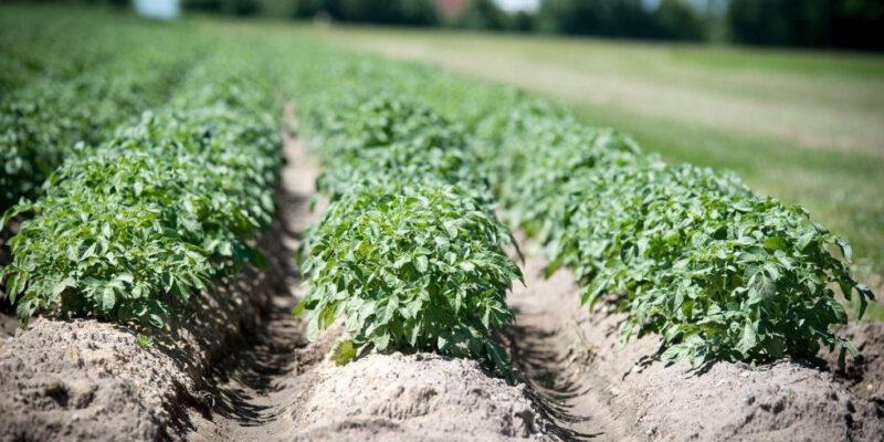 Wsparcie inwestycji w przetwarzanie produktów rolnych, obrót nimi lub ich rozwój – wkrótce rusza tzw. duży nabór wniosków